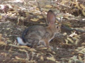 NW bunny