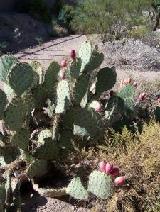 NW cactus