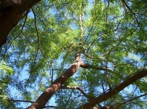 NW tree